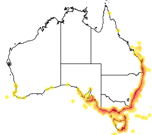 distribution map showing range of Puffinus gavia in Australia