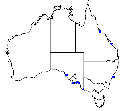 distribution map showing range of Puffinus puffinus in Australia