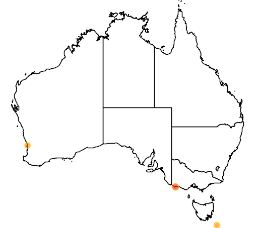 distribution map showing range of Pygoscelis adeliae in Australia