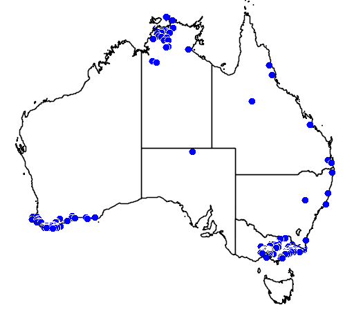 distribution map showing range of Rhinoplocephalus nigrescens in Australia