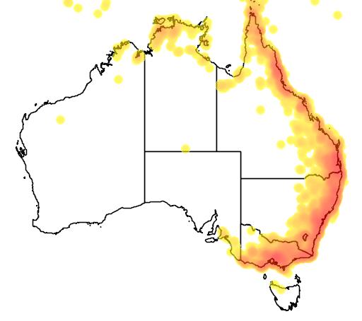 distribution map showing range of Rhipidura rufifrons in Australia