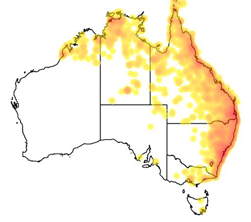distribution map showing range of Scythrops novaehollandiae in Australia