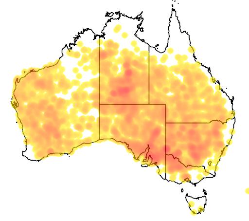 distribution map showing range of Senna artemisioides in Australia