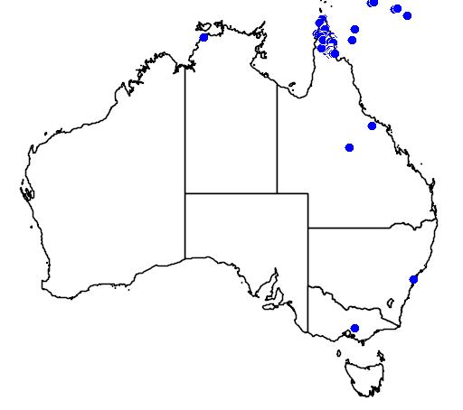 distribution map showing range of Spilocuscus rufoniger in Australia