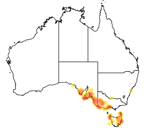distribution map showing range of Spyridium vexilliferum in Australia