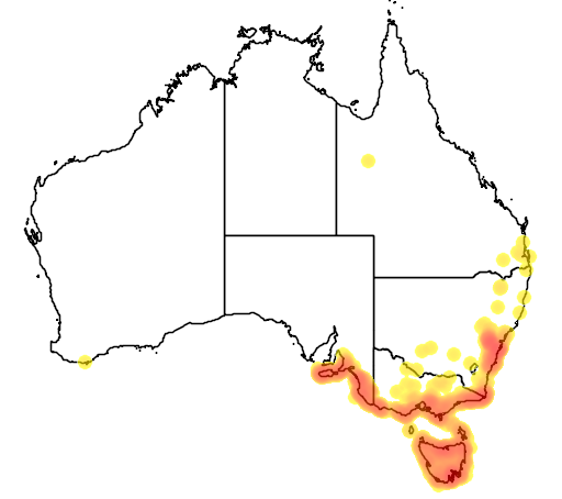 distribution map showing range of Stagonopleura bella in Australia