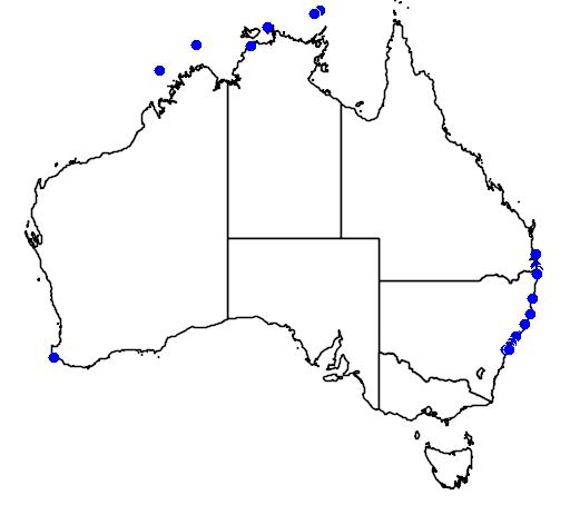 distribution map showing range of Stenella attenuata in Australia