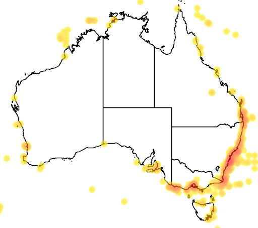 distribution map showing range of Stercorarius pomarinus in Australia
