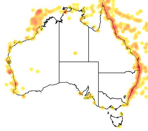 distribution map showing range of Sterna fuscata in Australia