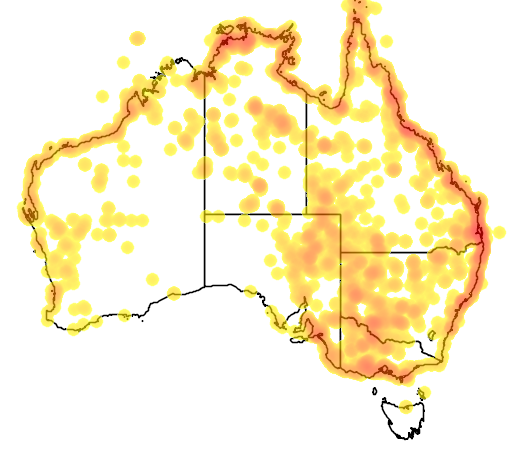 distribution map showing range of Sterna nilotica in Australia