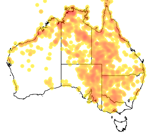 distribution map showing range of Stiltia isabella in Australia
