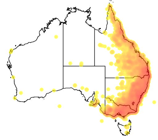 distribution map showing range of Strepera graculina in Australia