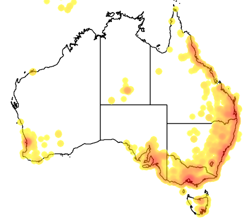 distribution map showing range of Streptopelia chinensis in Australia
