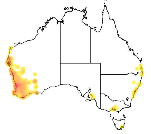 distribution map showing range of Streptopelia senegalensis in Australia