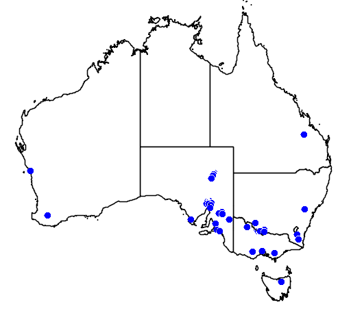 distribution map showing range of Struthio camelus in Australia