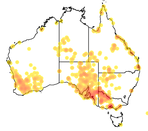 distribution map showing range of Tecticornia pergranulata in Australia