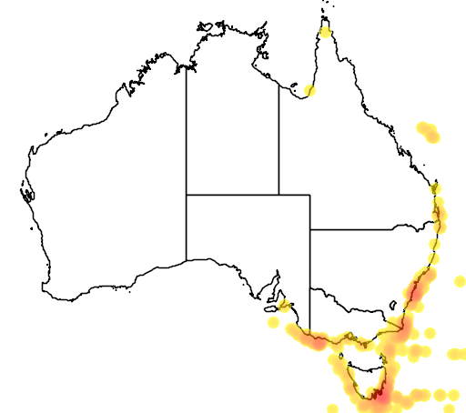 distribution map showing range of Thalassarche bulleri in Australia