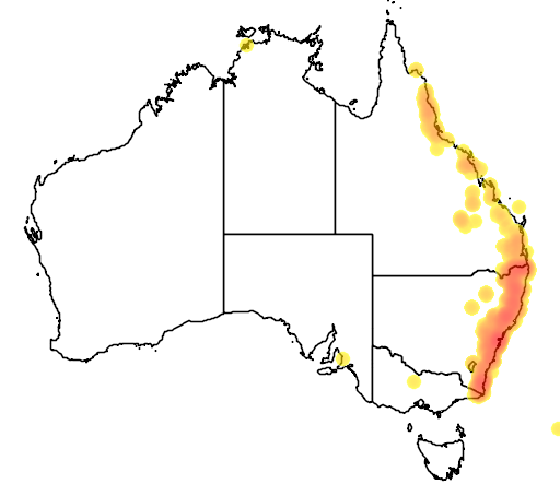 distribution map showing range of Thelychiton speciosus in Australia