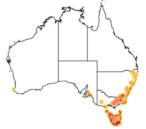 distribution map showing range of Thelymitra cyanea in Australia