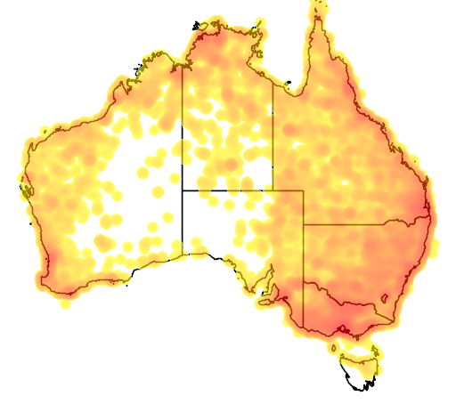 distribution map showing range of Threskiornis spinicollis in Australia