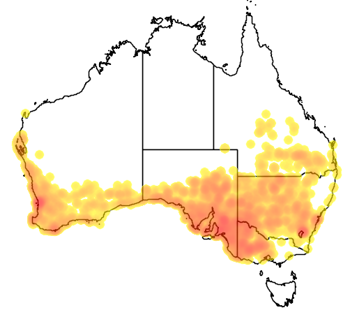 distribution map showing range of Tiliqua rugosa in Australia