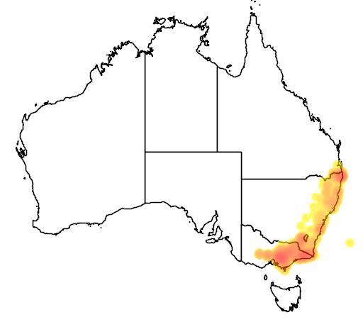 distribution map showing range of Trichosurus cunninghami in Australia