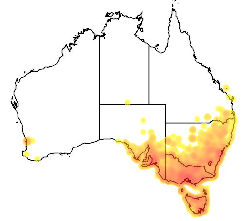 distribution map showing range of Turdus merula in Australia