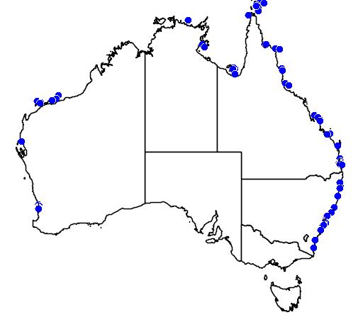 Upeneus australiae