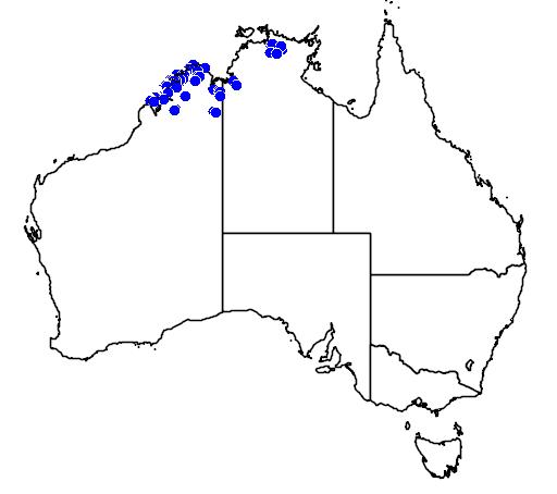 distribution map showing range of Varanus glauerti in Australia