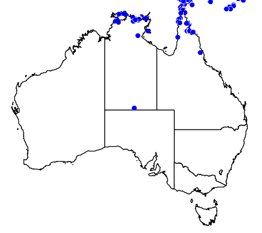 distribution map showing range of Varanus indicus in Australia