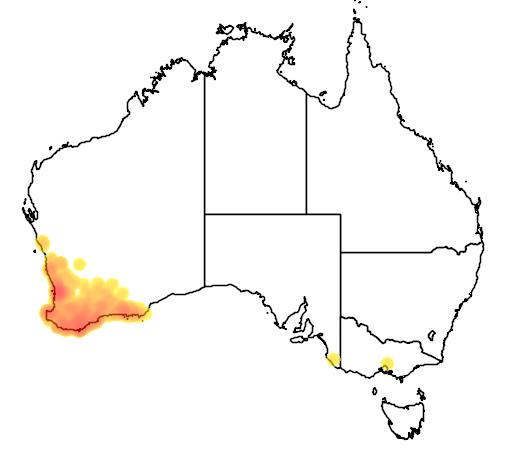 distribution map showing range of Verticordia plumosa in Australia